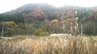 11月14日 花森湖周辺.JPG