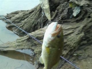 2009.8.30サミー85.JPG