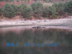 2011.11.23 熊野ワンド.JPG