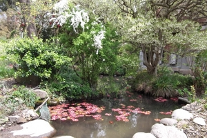 2011年5月8日 本家の池.JPG