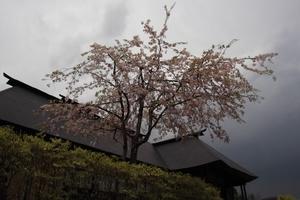 2011年5月8日楢下にて.JPG