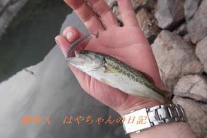これは〜〜〜.JPG