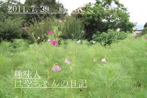 コスモス 蔵王にて.JPG