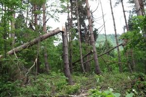 倒木がたくさん.JPG