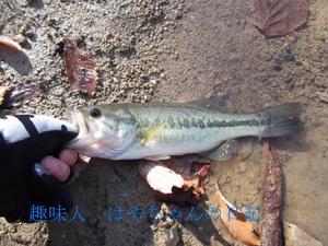 前川ダム 2011.11.23.JPG