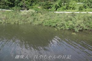 花森湖 超満水.JPG