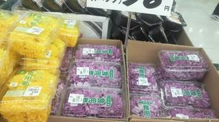 食用菊の販売が始まる.JPG