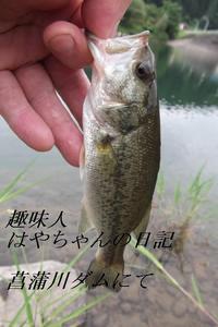 2011年7月19日 菖蒲ダムでの初バス.JPG