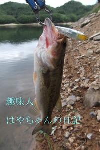 9月5日 前川ダム 熊野ワンド.JPG
