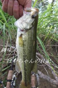 2011年7月6日 前川ダムにて.JPG