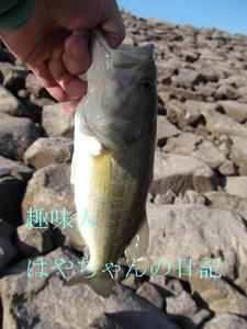 2011.10.1 .JPG