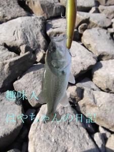 2011.10.1 花森湖にて.JPG