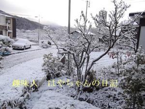 2011.12.10 朝.JPG