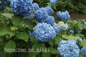 2011.7.25 蔵王にて.JPG