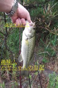 2011.7.26 前川ダム センコー.JPG
