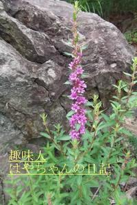 2011.7.26 前川ダムにて.JPG