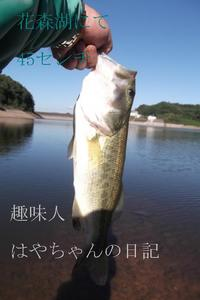 2011年9月7日 花森湖にて 45センチ.JPG