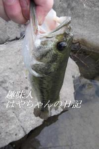 デカイ口.JPG
