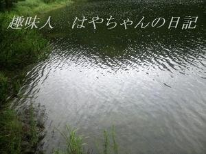 前川ダム ストラクチャー.JPG
