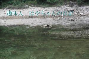前川ダム 熊野ワンド.JPG