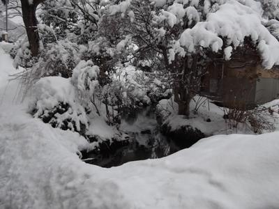 庭の池も・・・.JPG