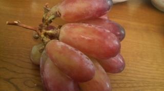 新品種のブドウ.JPG
