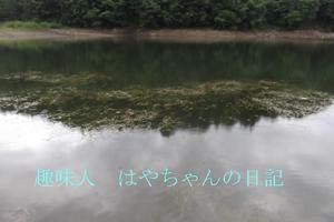 熊野ワンドのウイード.JPG
