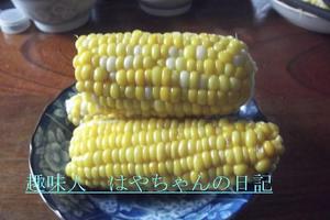 2011年我が家のトウモロコシ.JPG