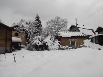2011年1月10日 本家の庭.JPG