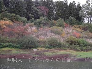 2011年10月15日 花森湖にて 秋色.JPG