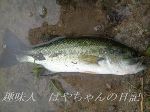 2011年7月8日 前川ダムにて.JPG
