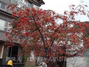 2011.10.23蔵王温泉街にて.JPG