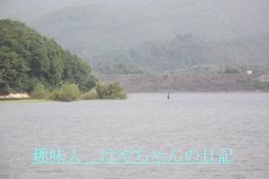 前川ダム 西側に出来た島.JPG